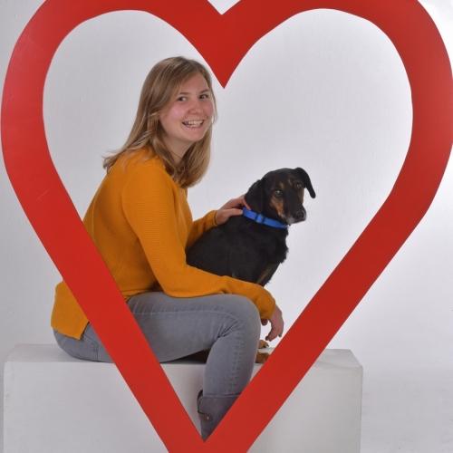 Ich liebe Hunde